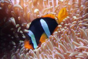 ryba pod vodou